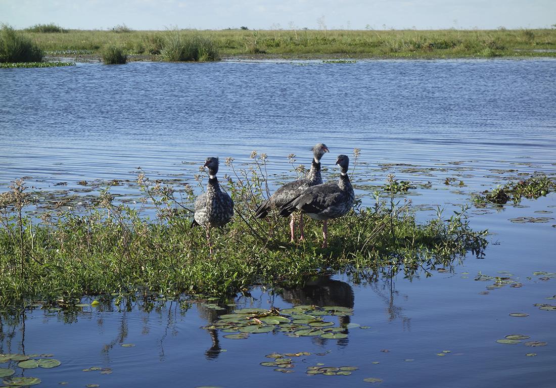 bird-species-esteros-ibera-argentina