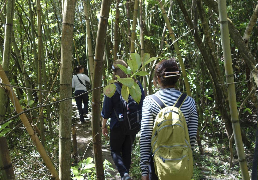 bosque-bamboo-tigre