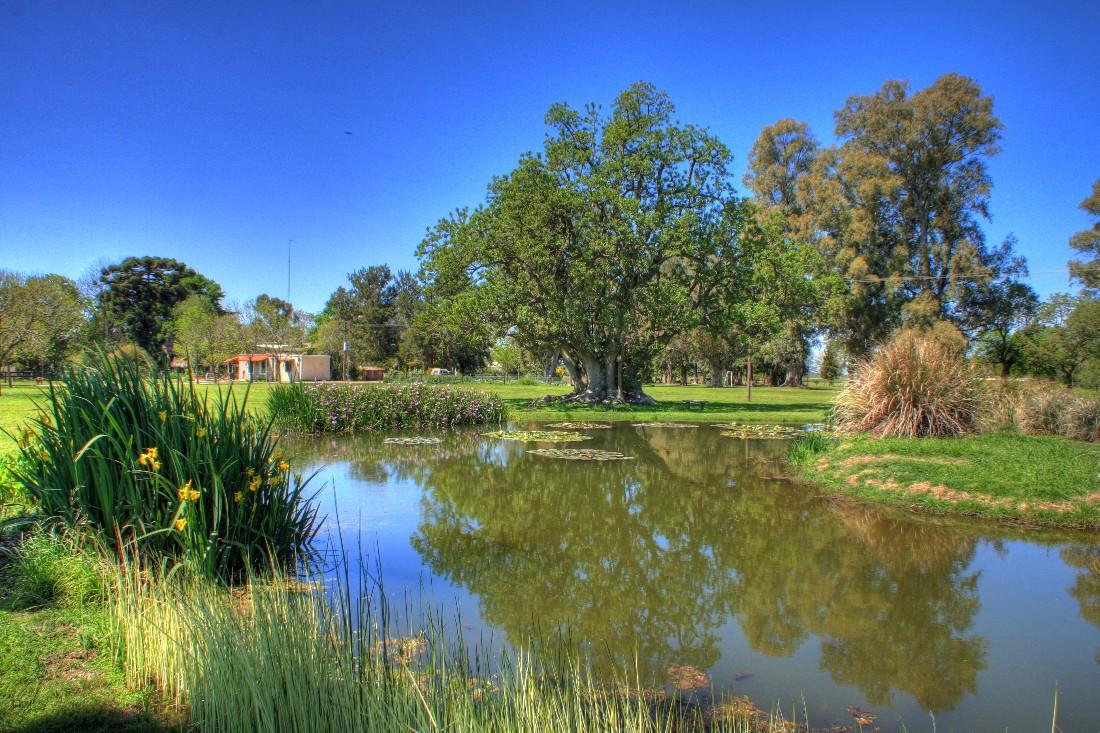 pond - Edited (1)