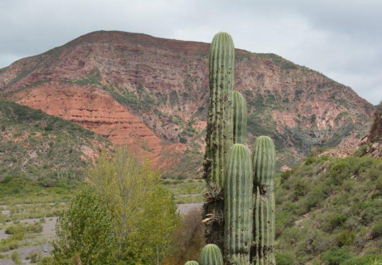 cactus et montagnes salta