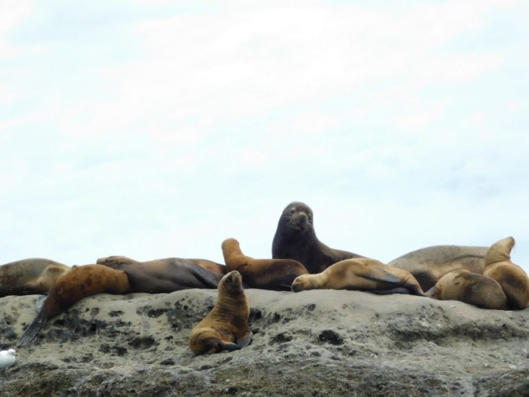 sea lion settlement