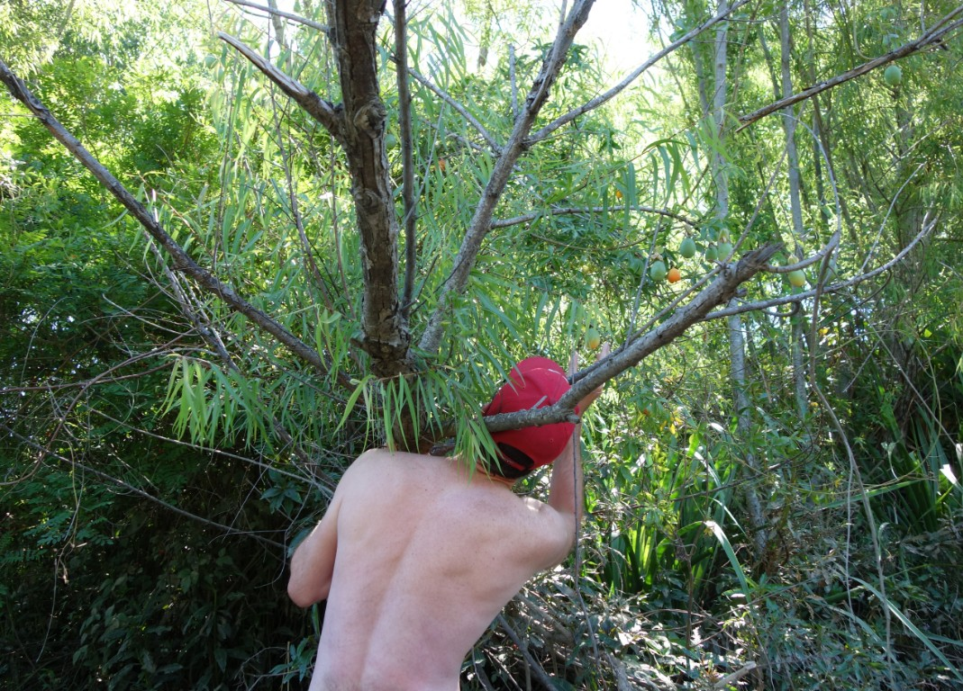 Eating maracuya from the tree in delta tigre
