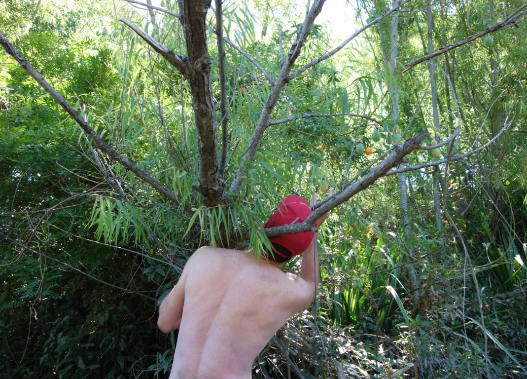 Eating maracuya from the tree in delta tigre