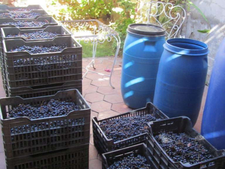 wine production mendoza
