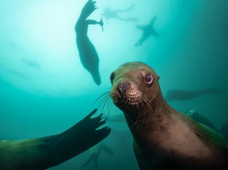 snorkelling lobos marinos